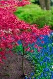 Moulins d'adnd de champ de tulipe vieux dans le netherland Image libre de droits