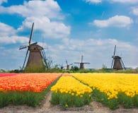 Moulins à vent néerlandais au-dessus des tulipes Photographie stock