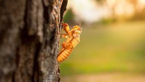 moult cicada Royalty Free Stock Photo