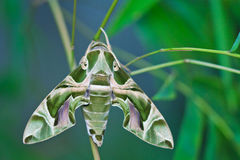 Moulting of moth Stock Images
