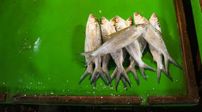 Mound of milkfish on green plastic table photo taken in Jakarta Indonesia Stock Photo