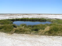 Mound Spring. Near Lake Eyre (Australia), sign of the Artesian Basin underlying the continent Stock Image