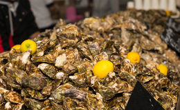 Mound of Unshucked Oysters Garnished with Lemon Royalty Free Stock Photo