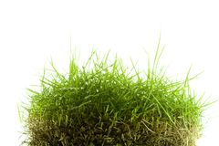 Mound of zoysia wet grass Stock Photo