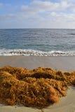 Mounds of Kelp Royalty Free Stock Photos