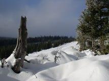 mount łąkowa Fotografia Royalty Free