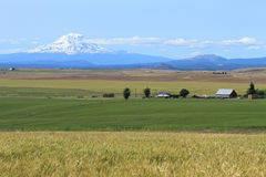 Mount Adams and farm fields Royalty Free Stock Photos