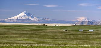 Mount Adams Mt Rainier Farm Agriculture Oregon Landscape Stock Photography