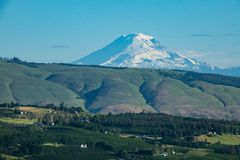 Orchards in Oregon with Mt. Adams in the background. Mount Adams rising over orchards in Oregon Stock Image
