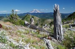 Mount Adams, Washington, USA Royalty Free Stock Image