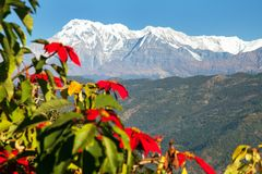 Mount Annapurna with red flowers Stock Photos