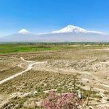 Mount Ararat в вулкане Армении, снег-покрытого и дремлющего составном стоковое изображение