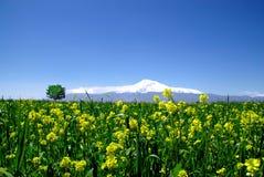 Mount Ararat. Biblical Mountain Ararat in Armenia Royalty Free Stock Photo