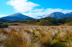 Mount Arthur area. Kahurangi National Park, New Zealand Stock Photos