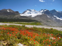 Mount Athabasca, Icefield Parkway, Canada Stock Photography
