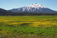 Mount Bachelor from Sparks Lake Stock Photos