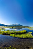 Mount Bachelor Vertical Reflection Royalty Free Stock Images