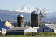 Mount Baker and Farm Silos. Washington States Mount Baker behind a farm with two silos Royalty Free Stock Photos