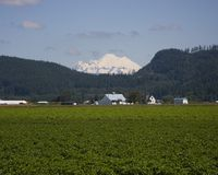 Mount Baker and farmlands. This photograph was taken in the Mount Vernon farmlands with a view of Mount Baker in Washington Stock Photos