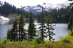 Mount Baker national forest Royalty Free Stock Photography