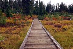 Mount Baker National Park Stock Photos
