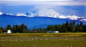 Mount Baker Skagit Yellow Flowers Washington Stock Photo