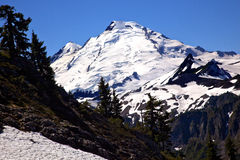 Mount Baker Snow Evergreens Washington Stock Images
