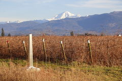 Mount Baker and Washington State Agriculture Royalty Free Stock Image