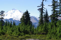 Mount Baker in Washington State Stock Images