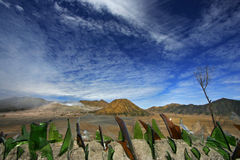 Mount Bromo in East Java Stock Photo