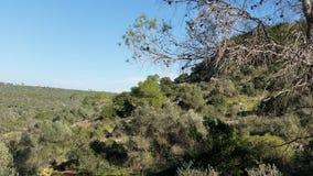 Mount Carmel Royaltyfria Bilder