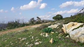 Mount Carmel Beit Oren Royaltyfri Bild