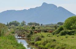 Mount Circeo landscape Stock Photos