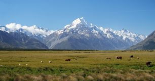 Mount Cook in New Zealand. Mount Cook on New Zealand's South Island Stock Photos