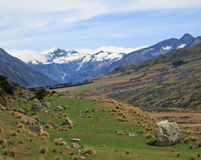 Mount Cook over a grassy plain Stock Images