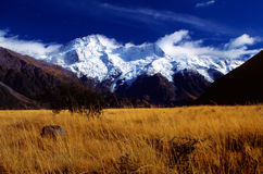 Mount Cook Panorama. New Zealand- Mount Cook national park with yellow grass in foreground Stock Image