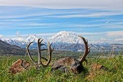 Mount Denali in Denali National Park in Alaska Stock Photo
