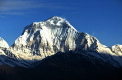 Mount Dhaulagiri 8172m. Dhaulagiri (8172m above sea level) seen from the Poon Hill viewpoint, Annapurna Region, Nepal Royalty Free Stock Image