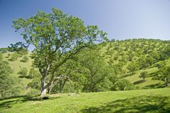 Mount Diablo foothills Stock Photography