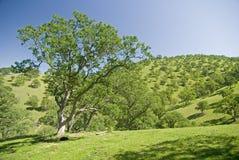 Mount Diablo foothills. Mount Diablo landscape, East Bay, San Francisco stock photography