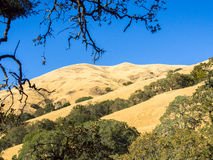 Mount Diablo, hill and tree Royalty Free Stock Photo