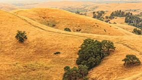 Mount Diablo hills and trees Stock Image