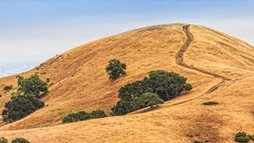 Mount Diablo hills and trees Stock Photography