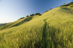 Mount Diablo state park in summer. East Bay, California royalty free stock photo
