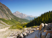 Mount Edith Cavell Trail. Rocky Mountains, Jasper National Park, Canada stock photography