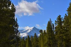 Mount Elbert in the trees. Mount Elbert from the north east among a row of lodgepole piness Royalty Free Stock Photography