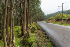 Mount Entoto Road Royalty Free Stock Image