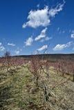 Mount Fruska Gora. Photo was taken at Mount Fruska Gora, Serbia royalty free stock images