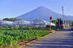 Mount Fuji как осмотрено от сельского городка в Японии стоковые фото