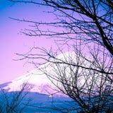 Mount Fuji Royalty Free Stock Image